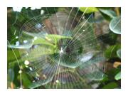 蜘蛛の巣避け